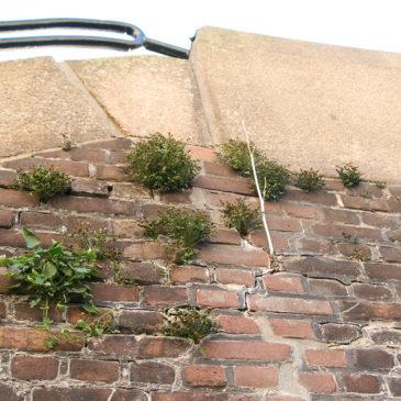 Flora en de fauna in de Oosterpoort