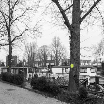 Van bomen en mensen: het mysterie van de groene stip